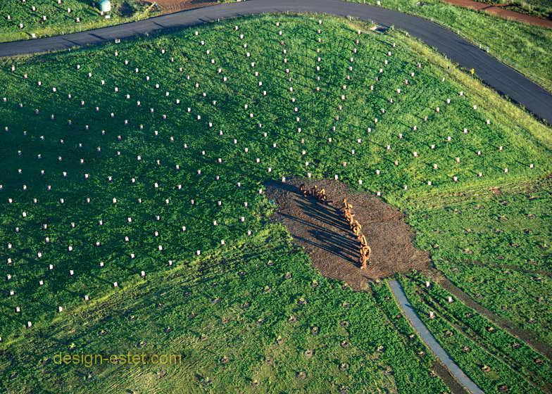 Садово-парковый ландшафт в Австралии