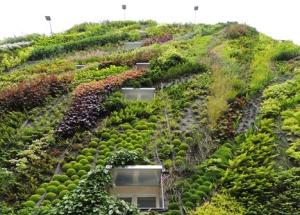 Вертикальное озеленение стен зданий и домов в городской среде